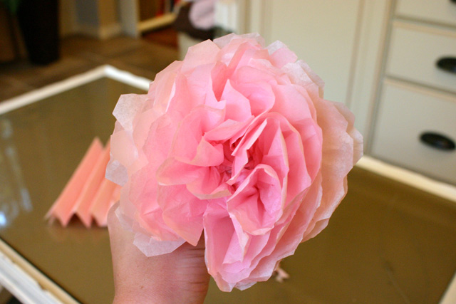 pink tissue paper peony flower