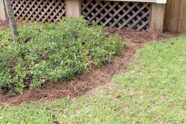 Gardenia Flower Bed After Edging and Pine Straw
