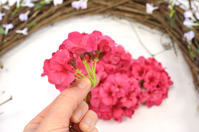 Geranium Buds Plucked from Stems