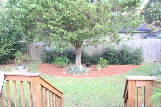 Back Flower Bed After Fall Cleanup