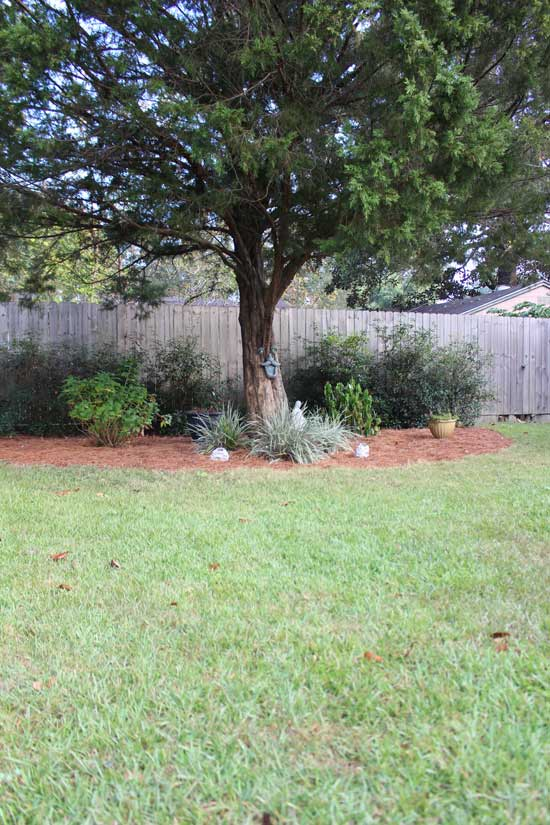 Big Flower Bed with Fresh Pine Straw