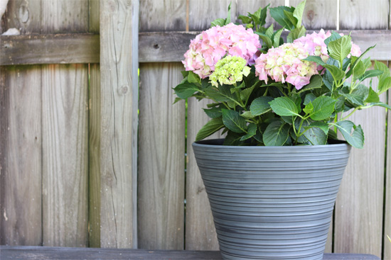 Gray Cabana Planter from Southern Patio with Pink Hydrangea and Self-Watering Insert