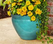 Convex Bell Planters from Southern Patio Giveaway