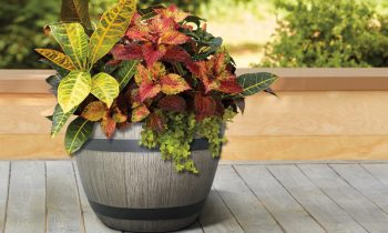Thrill Fill Spill Plants in Wine Barrel Giveaway