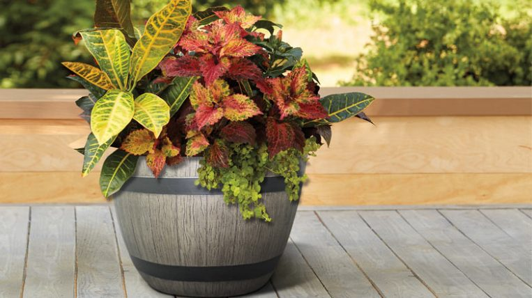 Wine Barrel Planter Giveaway Checking In With Chelsea