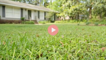How To Grow Green Grass Video
