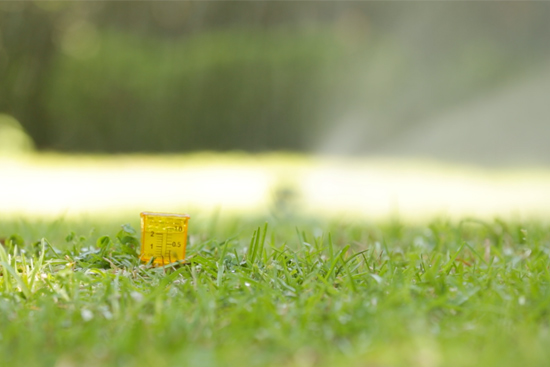 Water Gauge in Grass While Sprinkler is Running
