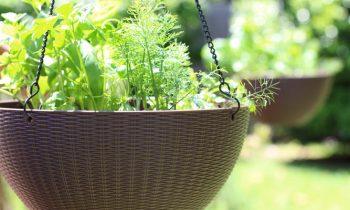 Hanging Herb Garden How To