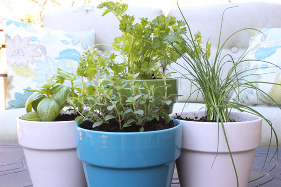 Small Herb Garden in Ceramic Planters