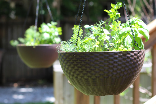 Using Hanging Baskets to Plant Herbs