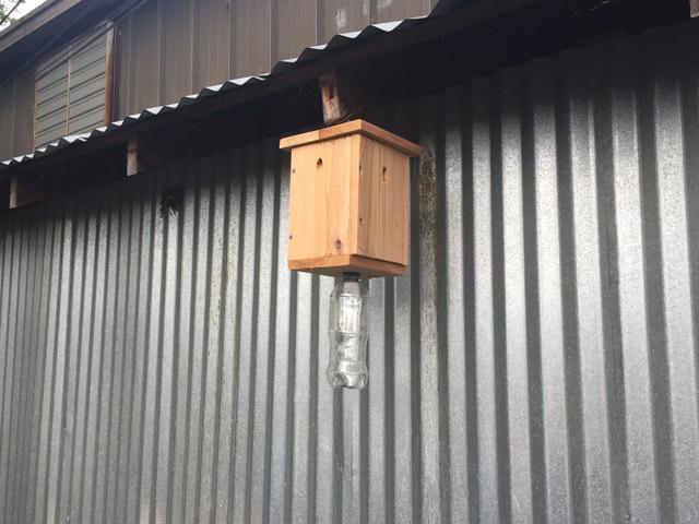 Hanging Carpenter Bee Trap