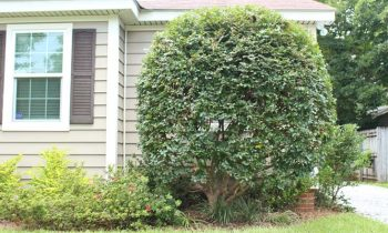How to Make Plant Look Like a Tree