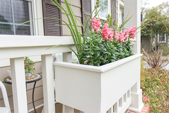 Pink Snapdragons in White Window Planter Box