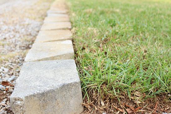 Centipede Green Grass Growing Behind Gray Retaining Wall