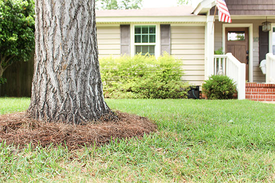 Front of Vinyl House with Tree Ring of Pine Straw Around Ginkgo