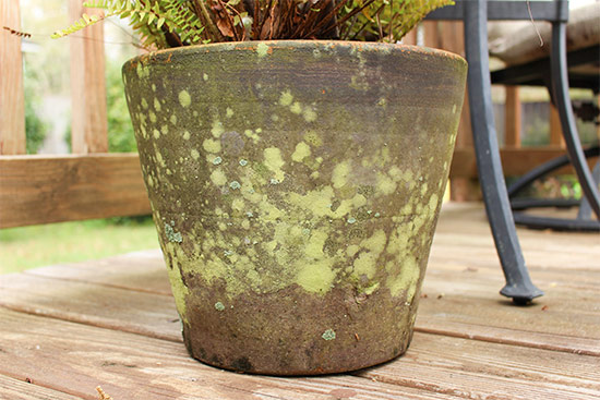 Green Mildew and Lichen Growing on Ceramic Planter Pot